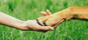 la sofferenza della perdita di un animale domestico